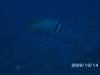 rybkinarafie