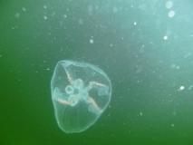 Hel 30.09-2.10 2011