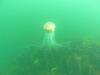 meduza potrafiła poparzyć