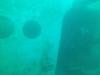 SeaLife DC1400